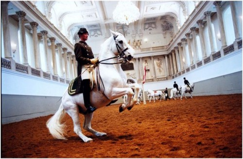 Spanish riding school in Vienna. Traditional European culture has many faces.